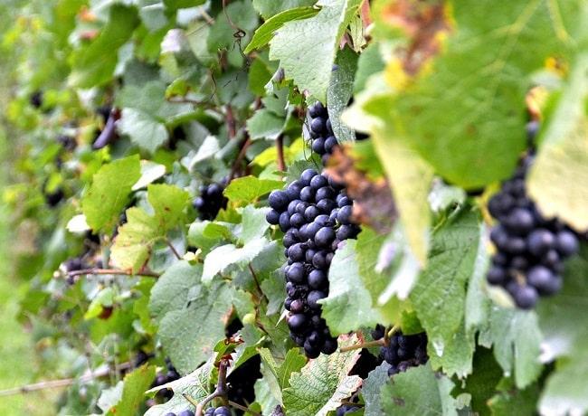 grands crus de Bordeaux en ligne