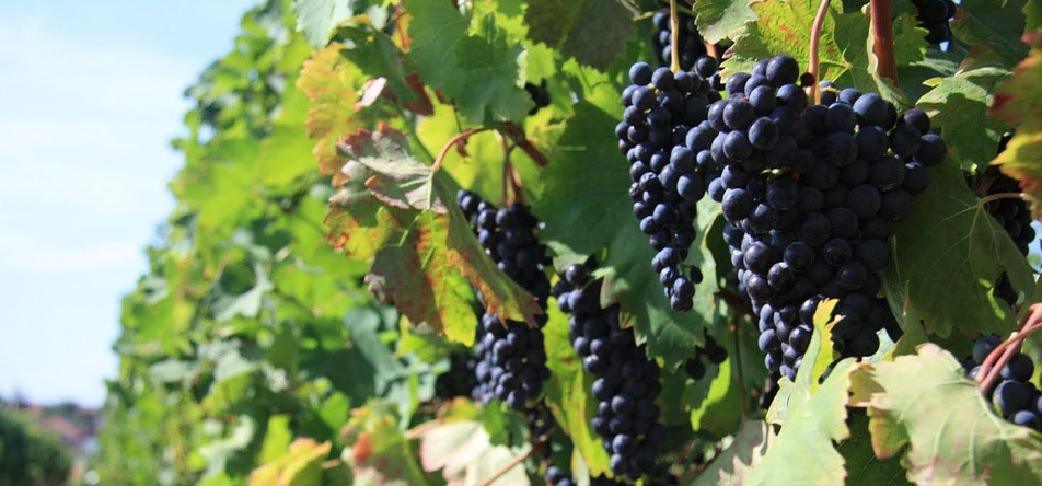 grands vins bordeaux