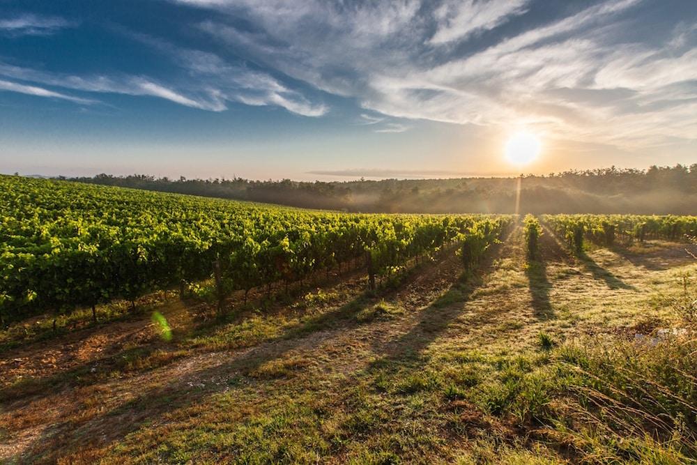 vigne-vins-originaux