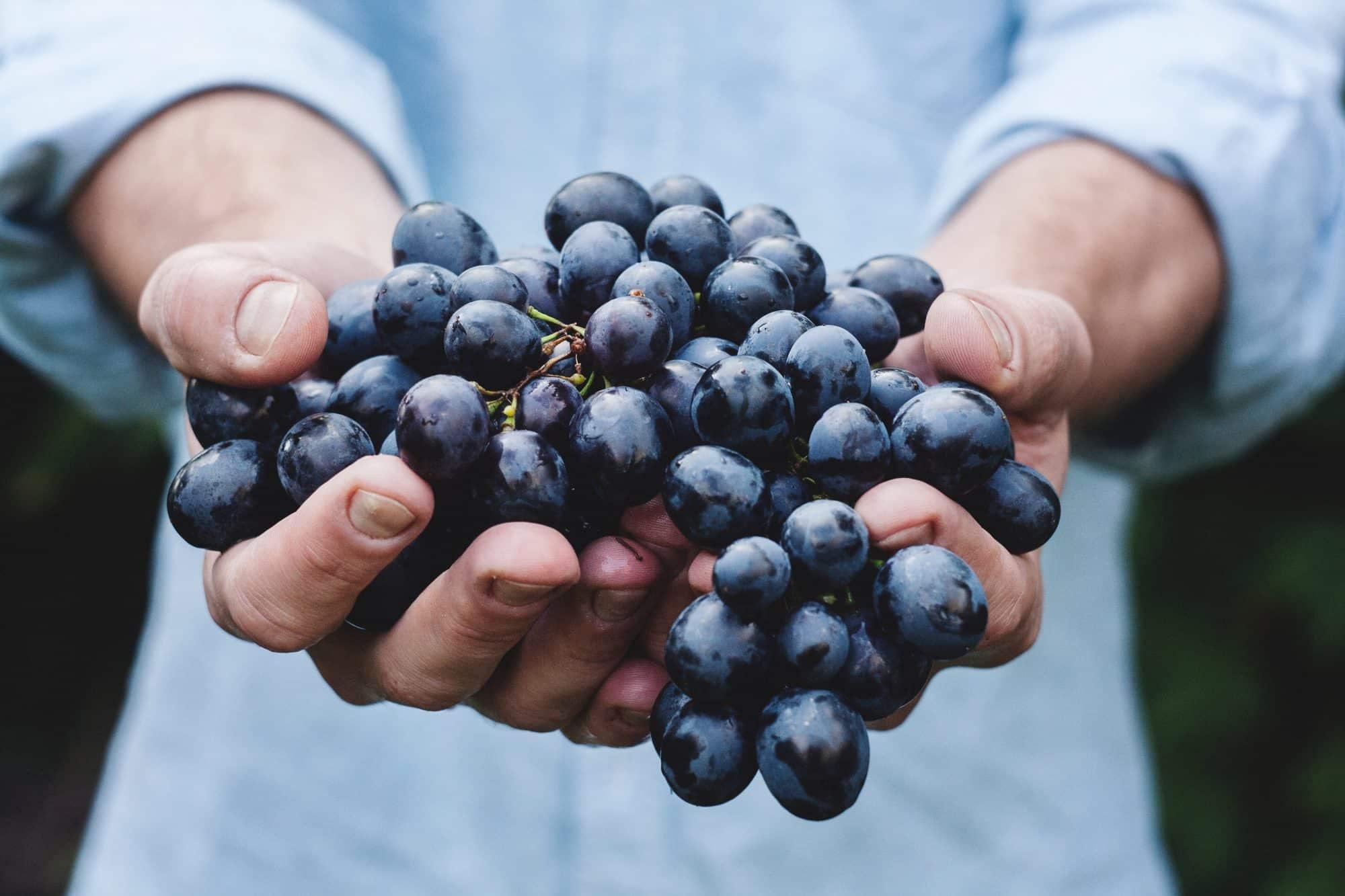 vins-en-biodyanmie-vins-etonnants