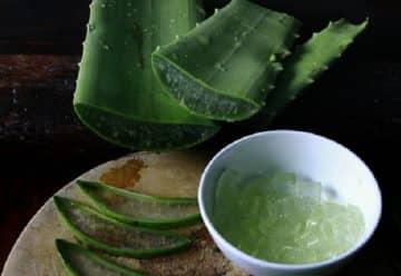 Comment utiliser aloe vera