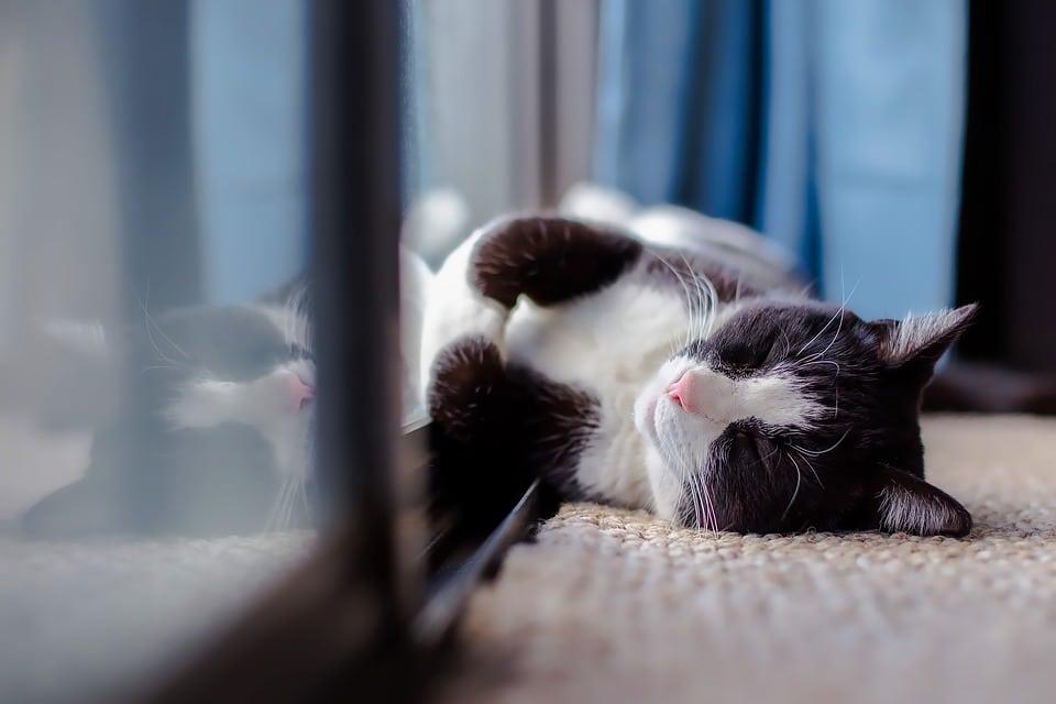 3 expressions insolites sur le sommeil