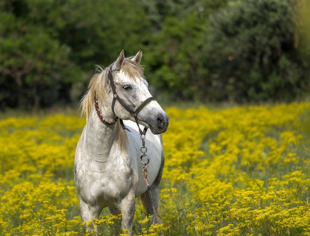 cheval materiel equitation brides