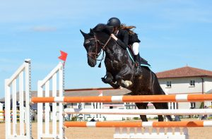cheval en saut d'obstacle